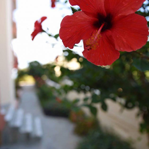 hotel-chania-crete-iolkos-accomondation-9